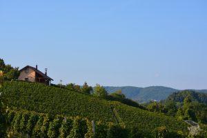 vinograd_09