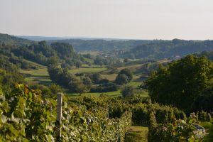 vinograd_10