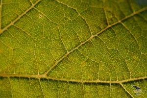 vinograd_14